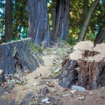 tree-stump-472859_960_720